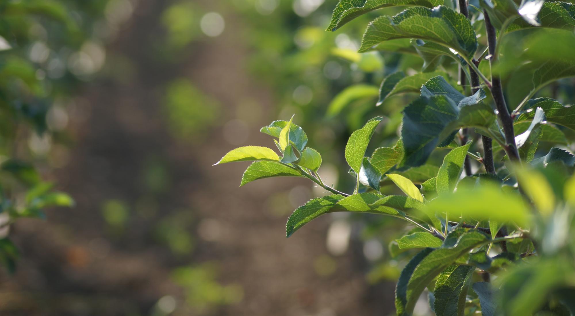 Certyfikat produktów rolnictwa ekologicznego: PL-EKO-07-08326