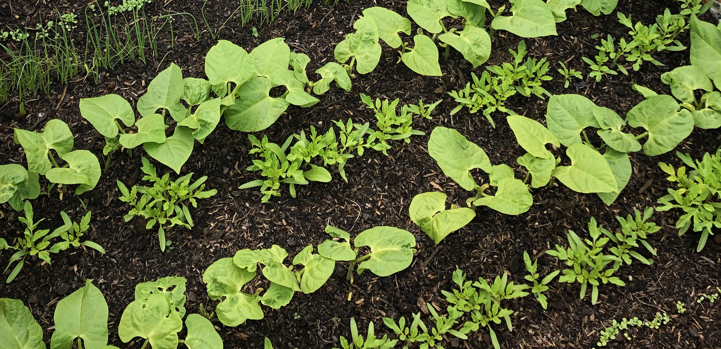 Zdrowa gleba, najważniejsze zadanie