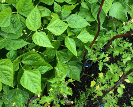 Ochrona roślin przy wsparciu natury