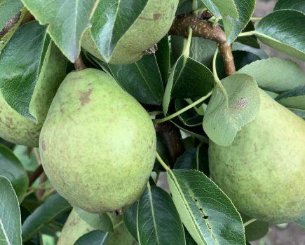 Termin sadzenia drzew owocowych