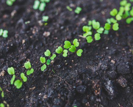 Organizmy Modyfikowane Genetycznie – Strefa wolna od GMO