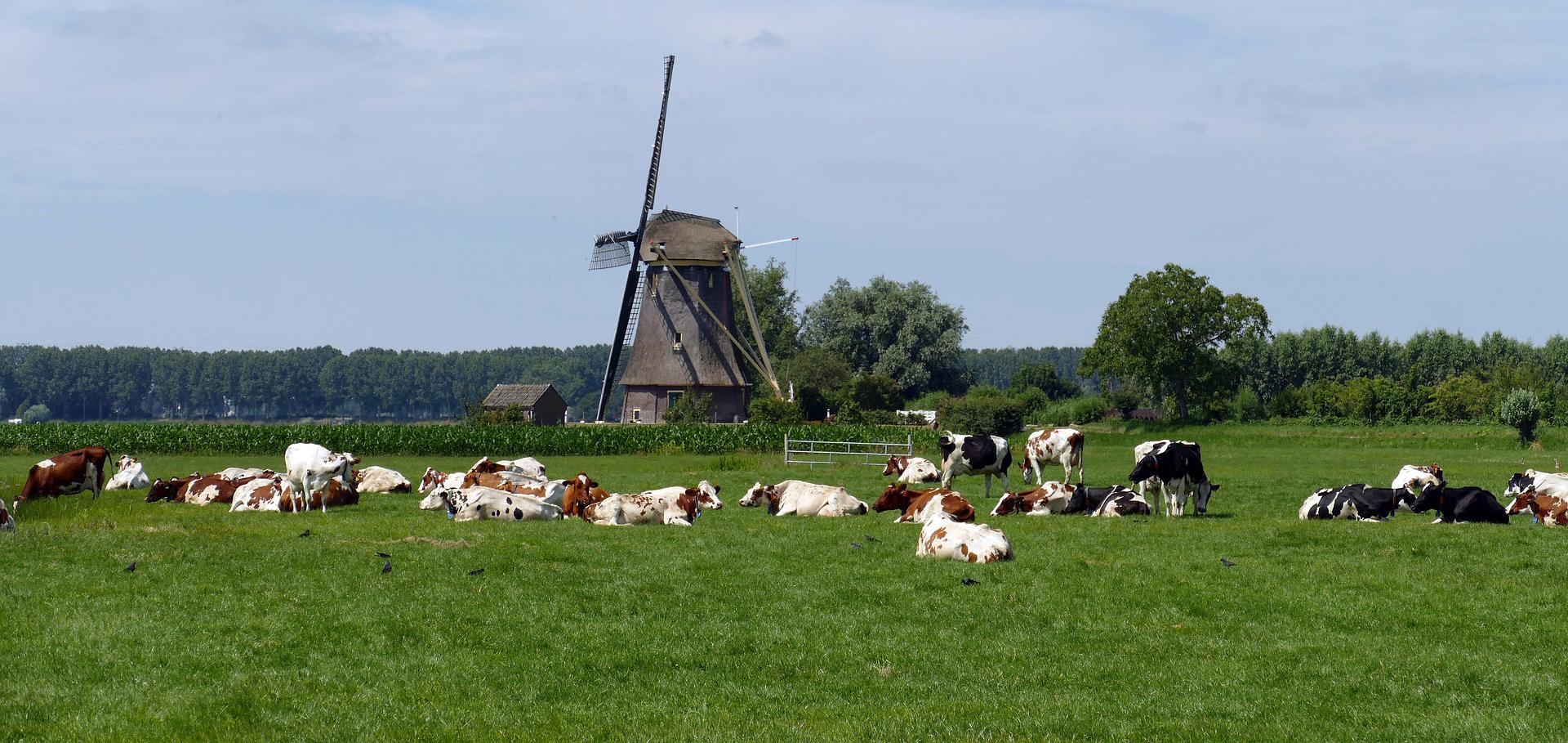 Początki rolnictwa ekologicznego na świecie