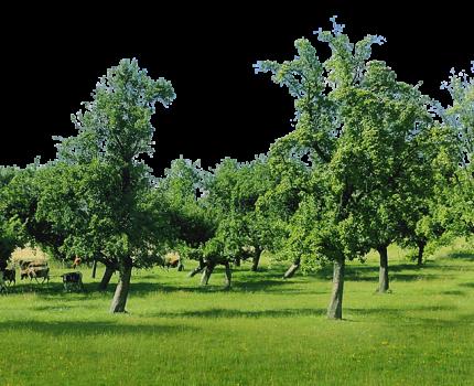 Galeria zdjęć szkółki ekologicznej Eko Ogrodnik