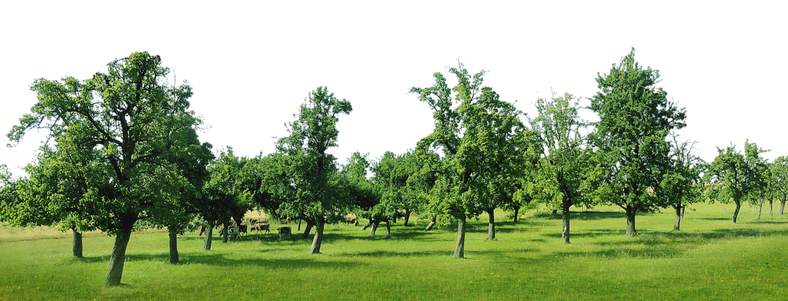 Szkółka Ekologiczna Drzew Owocowych - Ziobrowscy