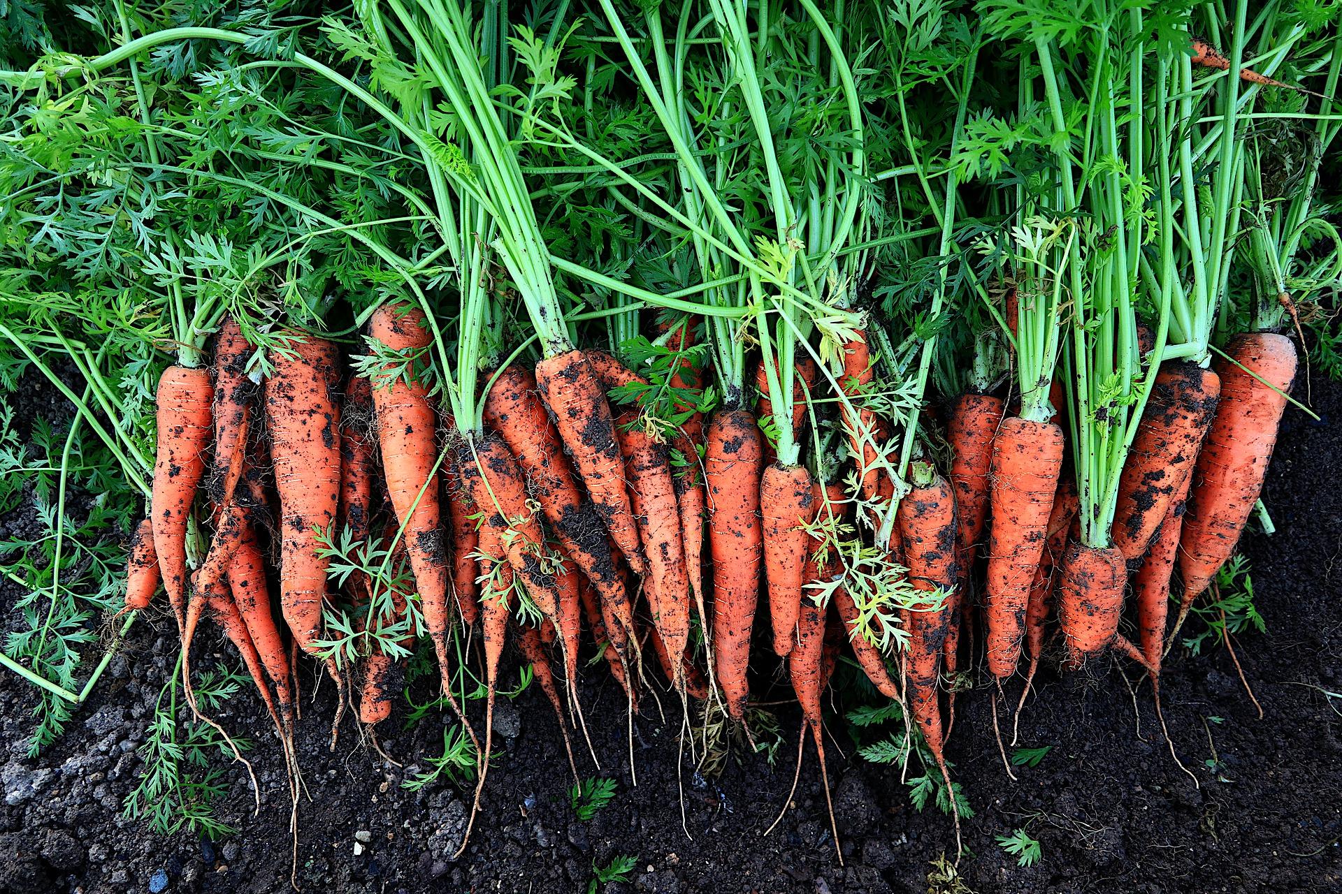 Czym jest rolnictwo ekologiczne ?